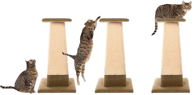 Bespoke Cat Scratching Posts Uk